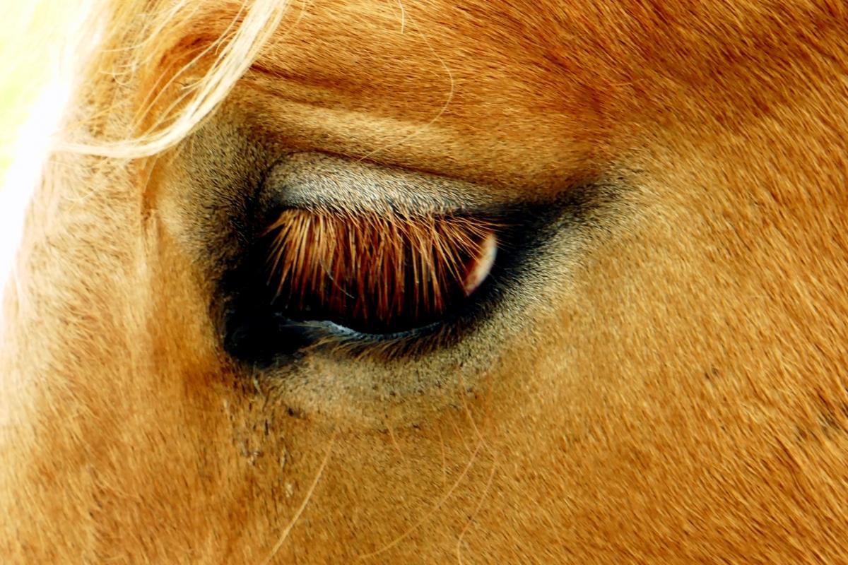 Symbolbild Pferd Viernheim