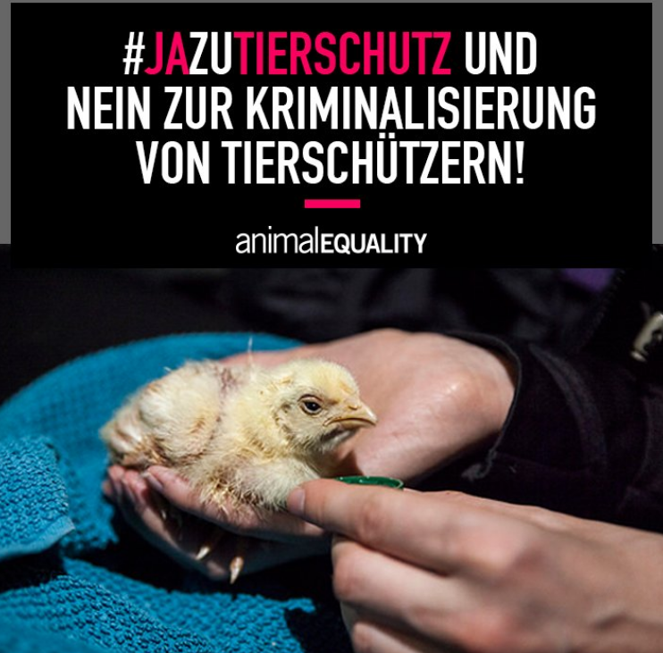 Foto by Screenshot: Twitter Animal Equality